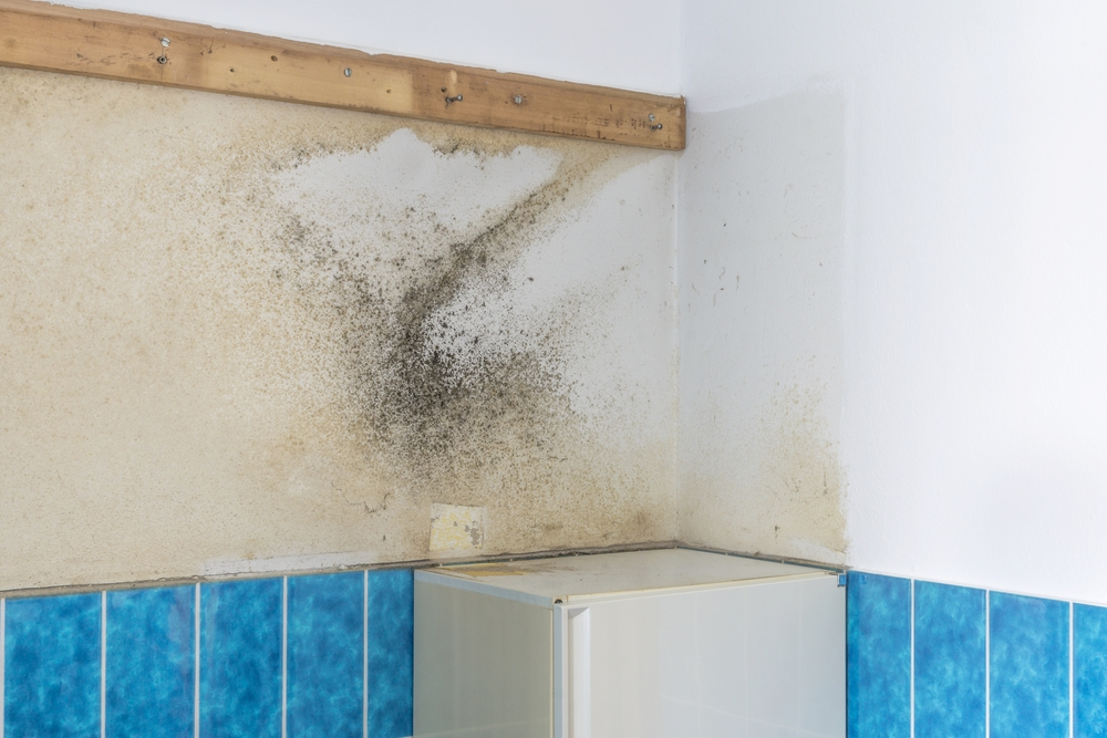 How Do I Handle Mildew and Mold before Repainting a Bathroom?